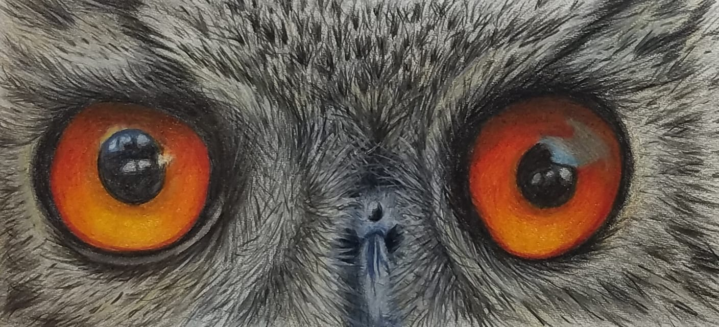 Owl Eyes painting in colored pencil
