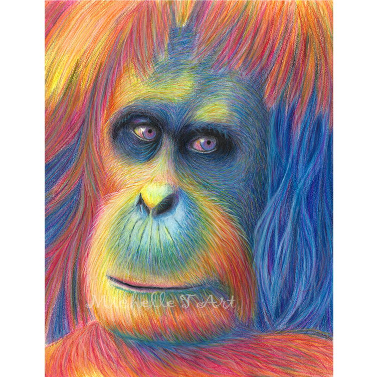sumatran orangutan colored pencil painting
